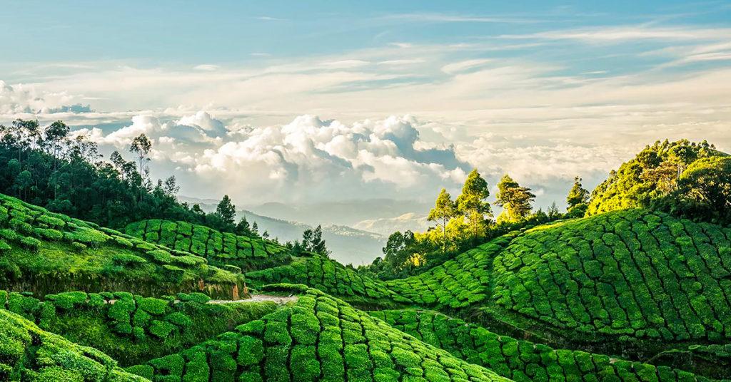 Panoramic Munnar